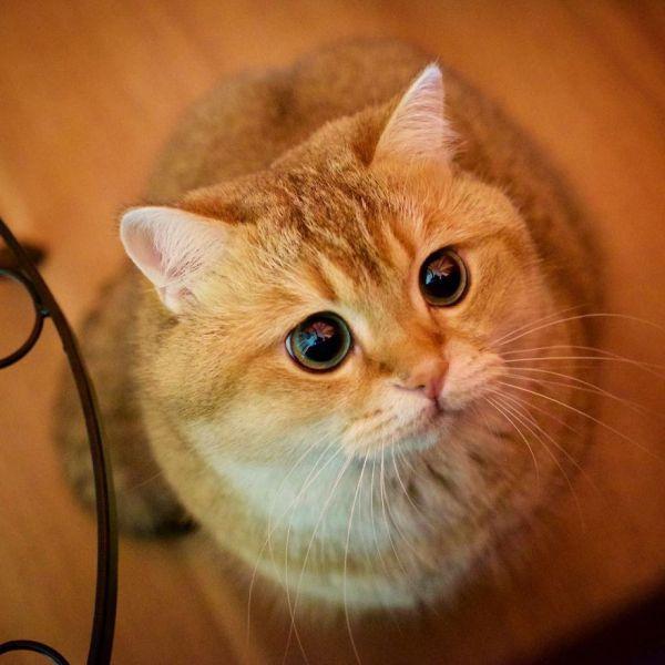 фото красивые рыжие коты